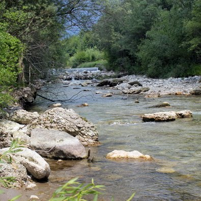 Kokra river: fines tenkara waters in Slovenia